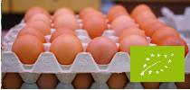 mini_startseite_eier